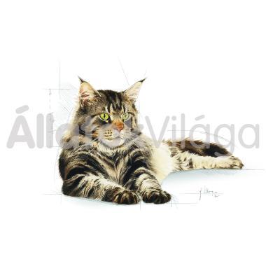 RoyalCanin Maine Coon Adult - Maine Coon felnőtt macska száraz eledel 400 g-os