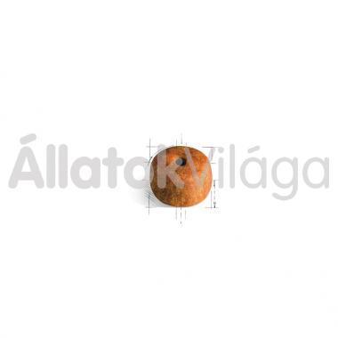RoyalCanin Siamese Adult - Sziámi felnőtt macska száraz eledel 400 g-os