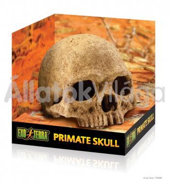 Exo-Terra Primate Skull emberi koponya odú PT2855