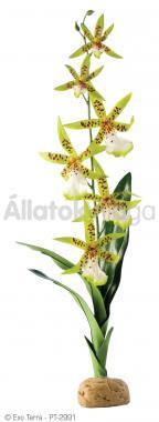 Exo-Terra Rainforest Plants Spider Orchid esőerdei műnövény PT2991