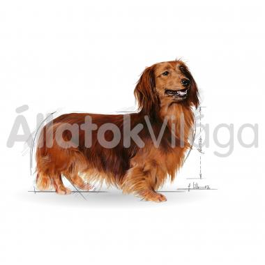 RoyalCanin Dachshund Adult - Tacskó felnőtt kutya nedves alutasakos eledel 85 g-os