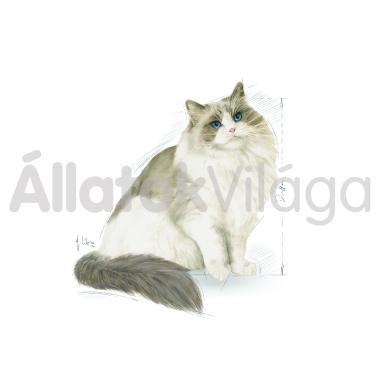 RoyalCanin Ragdoll Adult - Ragdoll felnőtt macska száraz eledel 400 g-os