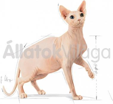 RoyalCanin Sphynx Adult - Szfinx felnőtt macska száraz eledel 400 g-os